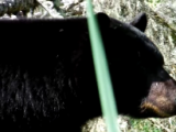 Here's What to do When a Bear Nearly Steps on You