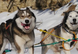 Dog Sledding in the Yukon – Part 1