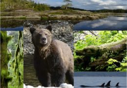 Your Surprise Quest to the Great Bear Rainforest